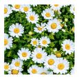 Dining Collection Lunch Napkins Flowers #37